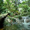 Channa gachua naturalne środowisko